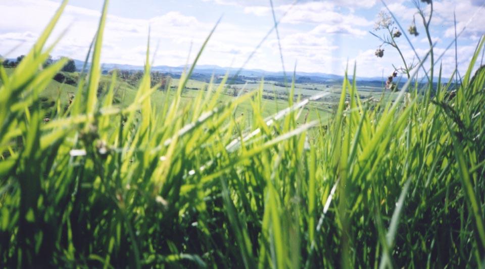 Biomass = Plants